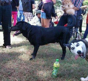 photobomb dog
