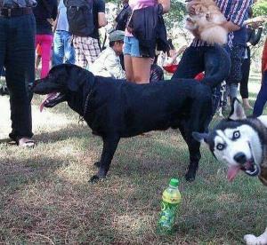 photobomb dog
